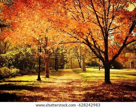 Autumn Landscape #628242983