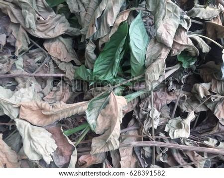 Leaves #628391582
