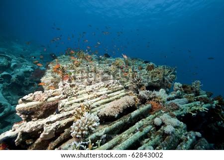 cargo of the Yolanda wreck #62843002