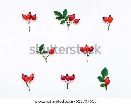 Bright red berries and branches of dog rose in a pattern on white background. Briar floral ornament. Flat lay, top view #628737515