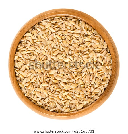 Einkorn wheat in wooden bowl, also called littlespelt. Dried grains. Triticum monococcum. One of the first domesticated and cultivated plants. Isolated macro food photo close up from above over white. #629165981