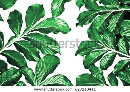 Botanical leaves pattern,green leaf tropical pattern,textile design #629210411