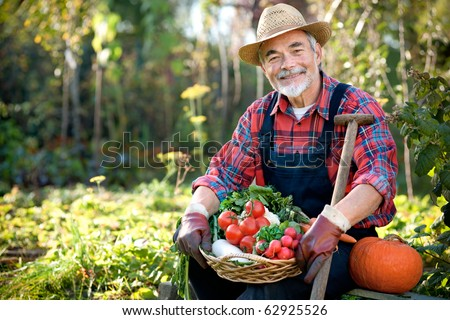 Senior gardener with a basket of harvested vegetables  in the garden #62925526