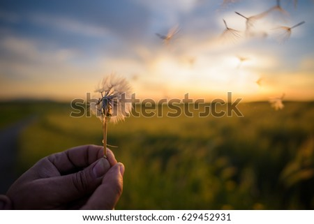 Blowing at sunset / Photo taken in the Sardinian countryside