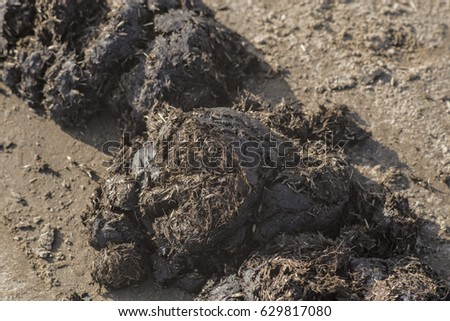 Horse dung on a country road. #629817080