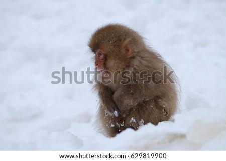 ?monkey #629819900
