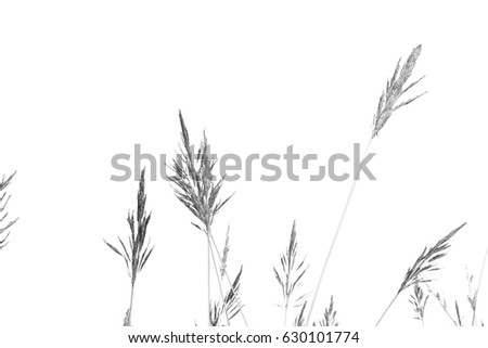 Black and white grass. #630101774