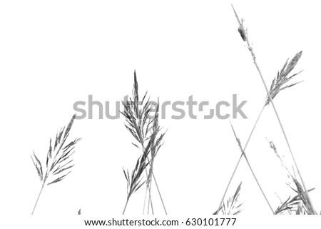 Black and white grass. #630101777