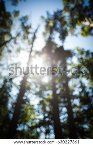 Blur view of trees in forest on a sunny day #630227861