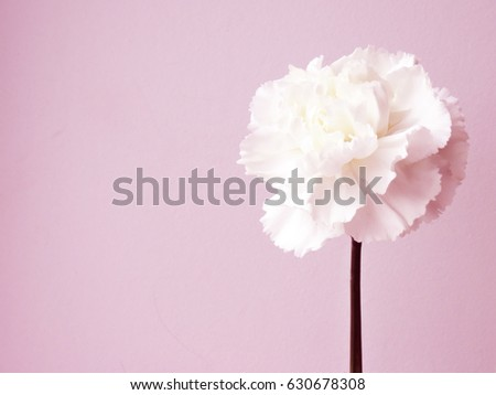 Flower on pink background. #630678308