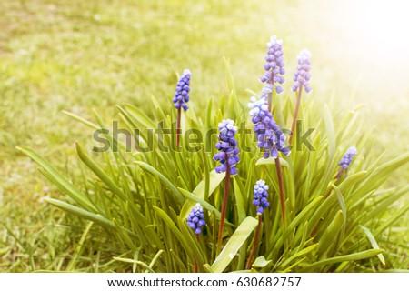 bush blue flowers #630682757