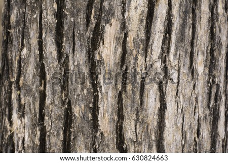 Bark, surface of tree for background. #630824663