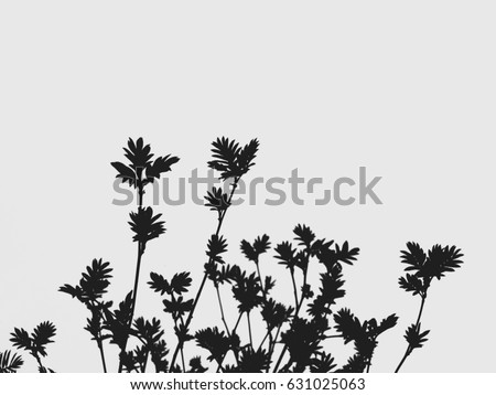 The mountain ash in early spring on a white background. Black-and-white. #631025063