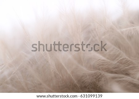 Background image of fluffy pale color feathers