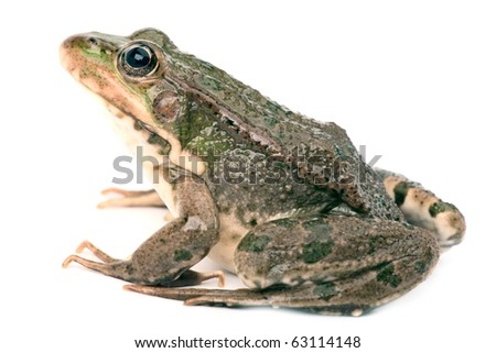 Green frog isolated #63114148
