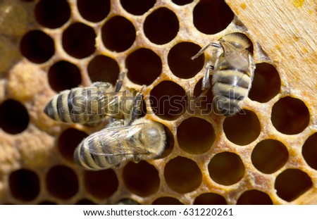 Bees on honeycomb in hive #631220261