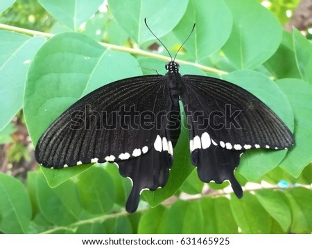 Butterfly in-sect #631465925