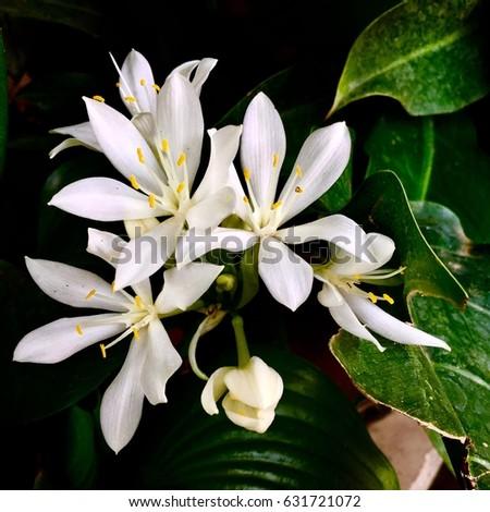 White flowers in Garden #631721072