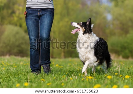 picture of a woman with her Border Collie on the meadow