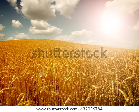 Wheat field against a sky #632056784