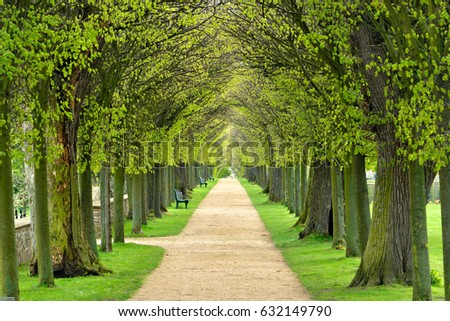 Avenue of Linden Trees, Tree Lined Footpath through Park in Spring Royalty-Free Stock Photo #632149790