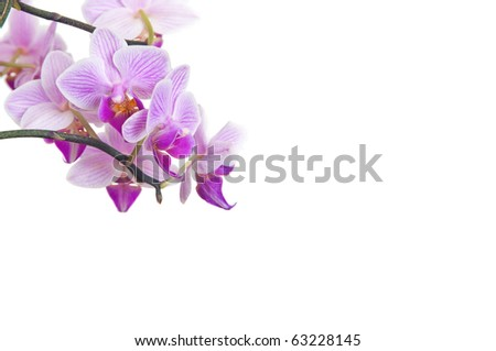 Isolated orchid on white background as template for spa, wellness and beauty publications
