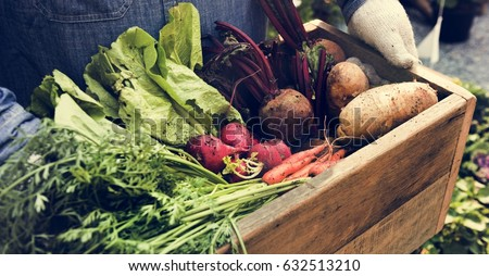 Adult Farmer Man Holding Fresh Local Organic Vegetable Royalty-Free Stock Photo #632513210