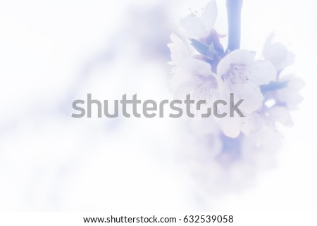 spring blossoming tree with white flowers #632539058