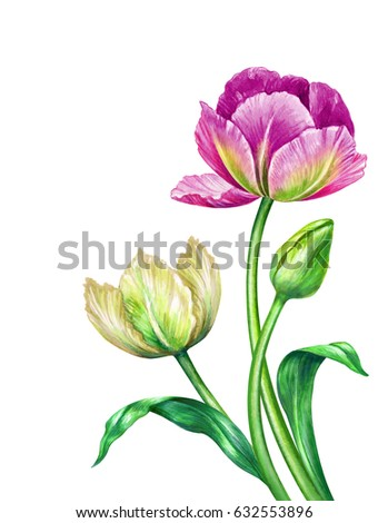 watercolor illustration, botanical art, colorful summer tulips, floral background, beautiful bouquet of wild flowers, festive greeting card, Easter, Mother's day, clip art isolated on white