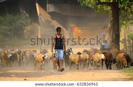 Kolkata, India - April 30, 2017: A shepherd taking his herd of sheep to the fields.  #632836961