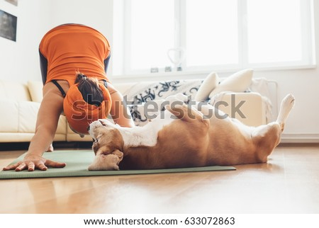 I always will be near with you. Beagle dog lies on the yoga mat when his owner makes yoga exercises Royalty-Free Stock Photo #633072863