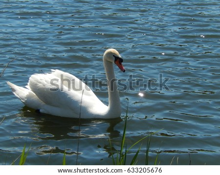 Beautiful swan #633205676