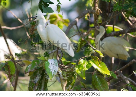 Little Egret #633403961