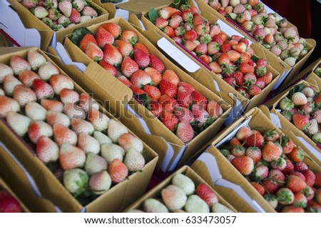 Fresh red sweet strawberry fruit in the paper box package for tourist at the market place Chiangmai, Thailand #633473057