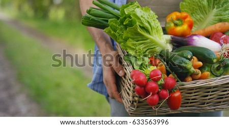 Basket with vegetables (cabbage, carrots, cucumbers, radish and peppers) in the hands of a farmer background of nature Concept of biological, bio products, bio ecology, grown by yourself, vegetarians. #633563996