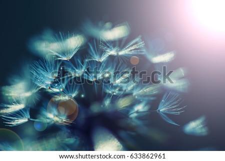 Dandelion after rain ,close up #633862961