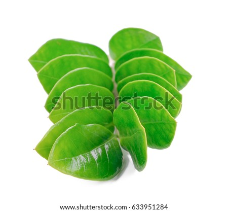 Zamioculcas zamiifolia, Orchidaceae, leaves on white background. #633951284
