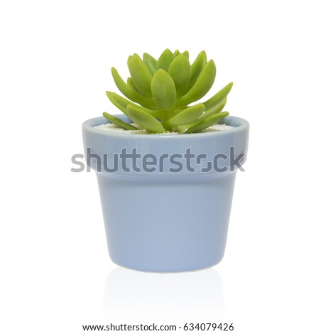 Small cactus in a flowerpot isolated on white background.Clipping path. #634079426