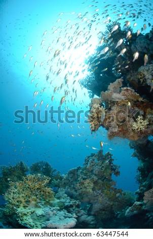 Glass fish pinnacle and sun #63447544