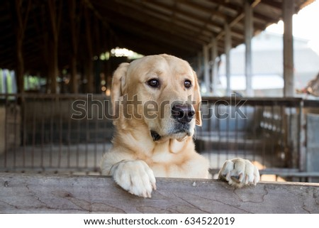 Brown dog stood and wait over the cage background #634522019