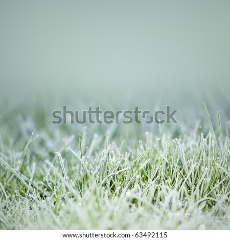 An image of an autumn icy grass Royalty-Free Stock Photo #63492115