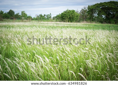 Wild green grass background, Thatched #634981826