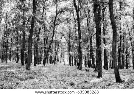 Black and white forest #635083268