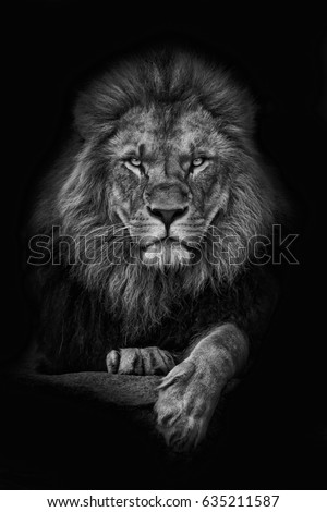 Lion, King black and white
