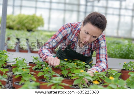 taking care of the plants #635225060