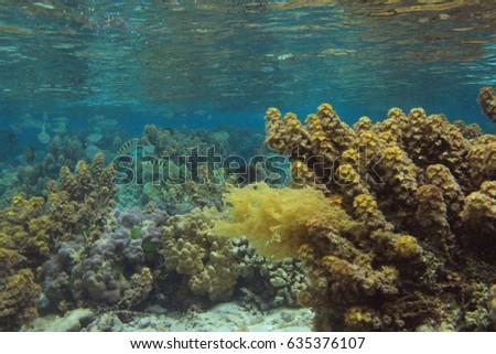Snorkeling, diving, Beautiful coral reef underwater #635376107