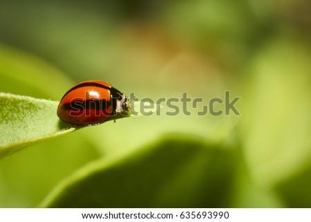 A macro shot of a tiny ladybug on a leaf #635693990