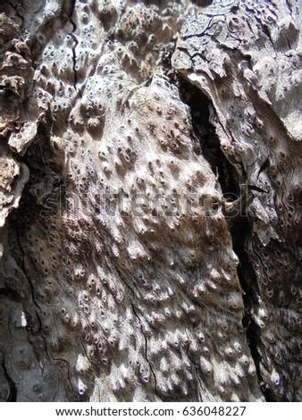 Old Tree #636048227