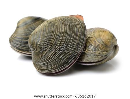 fresh clams on white background #636162017