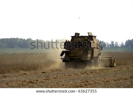Cà Venier (Ro),Italy,Po River Delta, threshing a field #63627355